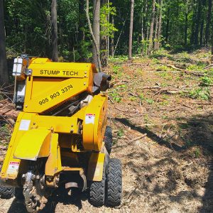 stump tech grinder is visible in the foreground after removing many stumps in the middle of a forest or wooded Ontario area