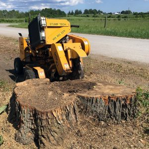 stump grinder in use chipping away at a large stump in the ground near farm land